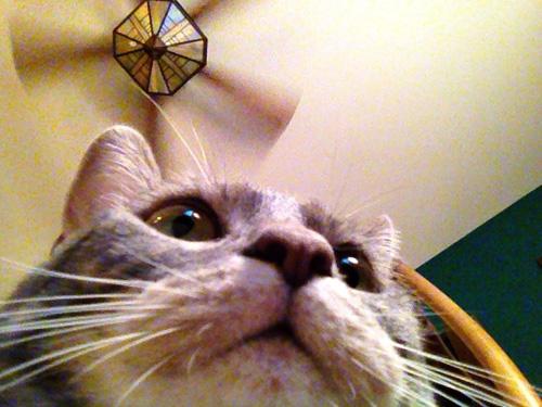 Misty Selfie
